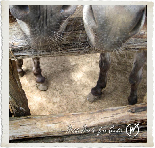 Evans Weavers Donkeys